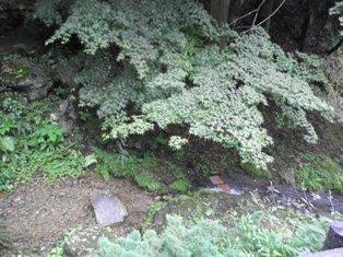 木と川-R.JPG