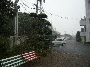 2010初雪2.JPG
