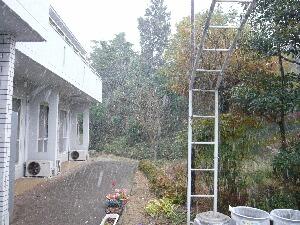 2010初雪3.JPG