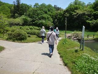 菖蒲園池1