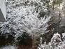 積雪7.jpg