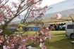 フリマ開始前、桜が見頃の時期です。.JPG