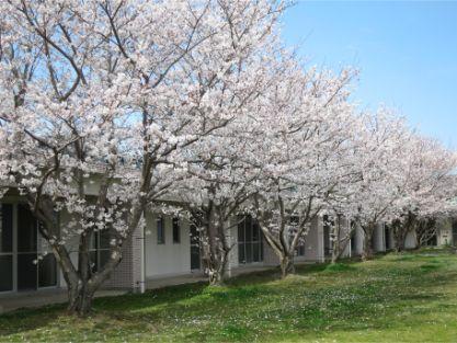 IMG_1838 桜 (1).jpg