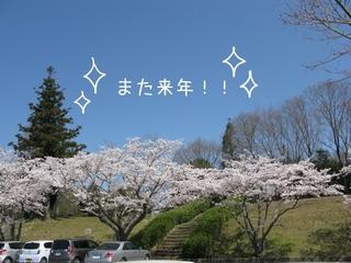 お花見⑥.jpg